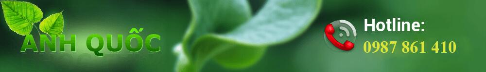 thảo dược sinh phương