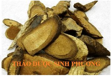 Hải Phong Đằng