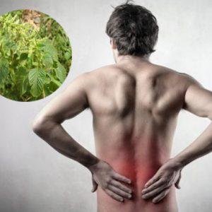 Dùng cho người mới bị đau lưng gai cột sống