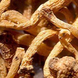 Cây hoàng tinh có tác dụng bổ âm dưỡng khí kiện tỳ