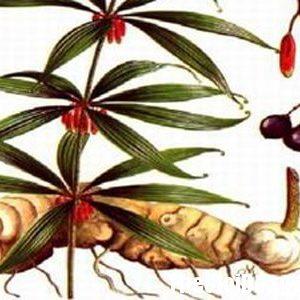 Được sử dụng nhiều để chữa bệnh ho ra máu, tiểu đường, ăn uống không ngon.