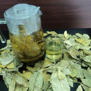 Lá hồng rừng phơi khô được sắc làm nước uống hàng ngày thay trà