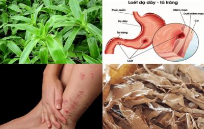 Cây lược vàng chữa được rất nhiều bệnh khác nhau