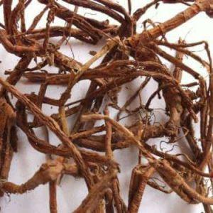 Rễ dâu tằm làm thuốc lợi tiểu, chữa ho lâu ngày