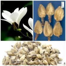Tân di hoa chữa viêm mũi, viêm xoang, tăng huyết áp, đau đầu do mạch máu.