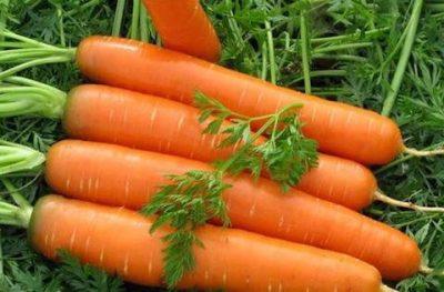 Cà rốt chữa sỏi, vàng da, xơ vữa động mạch, suy gan mật, bệnh ngoài da.