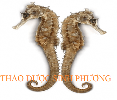 Hải Long