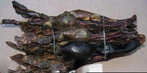 Thận hải cẩu chữa yếu mỏi thắt lưng, gối, thận dương suy nhược.