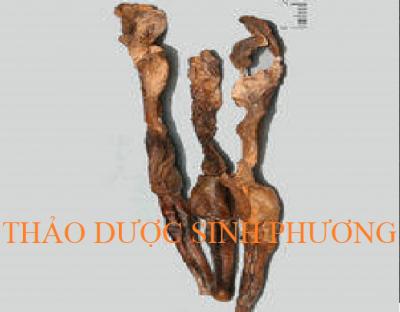 Hoàng Cẩu Thận