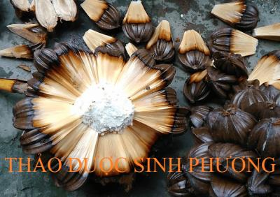 Dừa Nước