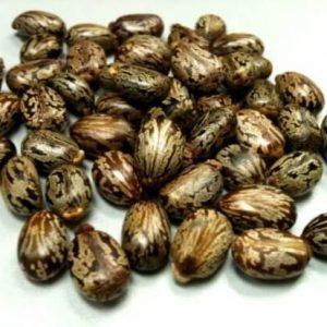 Hạt thầu dầu chữa đau nửa đầu, điều trị táo bón, bắt đầu chuyển dạ trong thời kỳ mang thai.