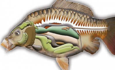Mật cá trắm trị bệnh ngoài da, ho, hen suyễn, suy nhược cơ thể, mất sức.