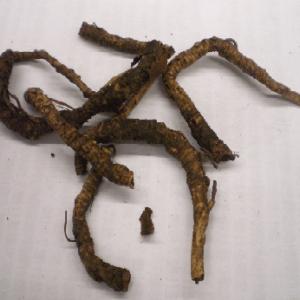 Hồ hoàng liên trị trẻ nhỏ bị cam tích do nhiệt, tiêu chảy, vàng da.