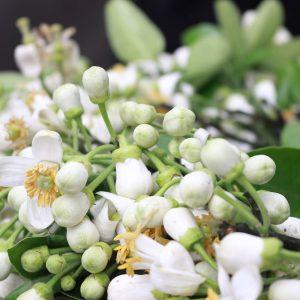 Tinh dầu hoa bưởi giúp cơ thể thư giãn, đem lại cảm giác thoải mái.