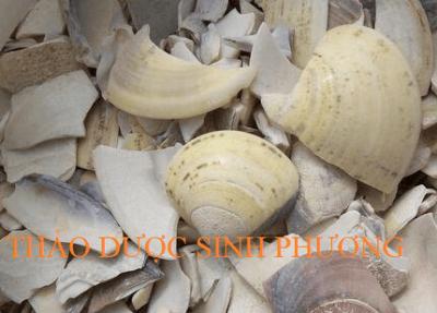 Hải Cáp Phấn – Mua Ở Đâu ?