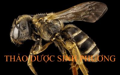 Nọc Ong